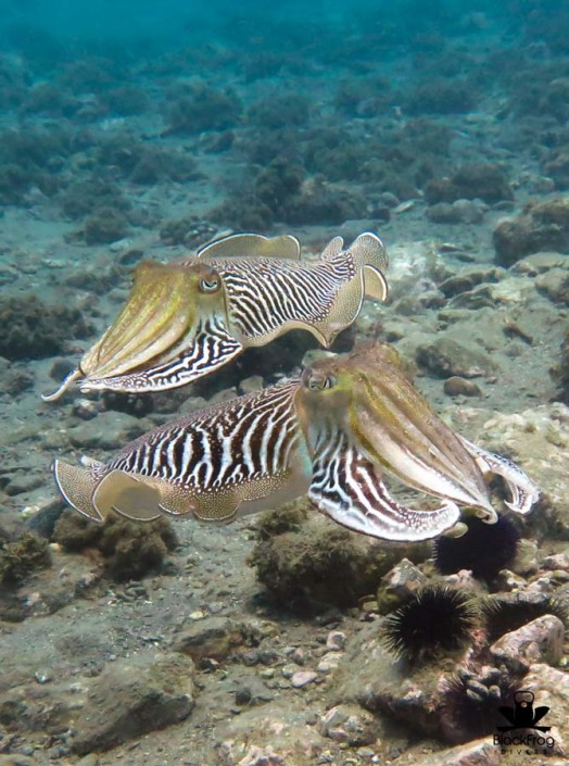 Scuba diving sea life Spain