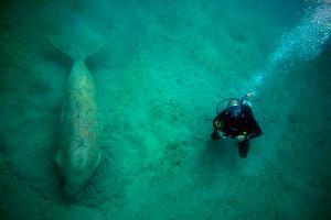 Scuba diver Instructor Torrox