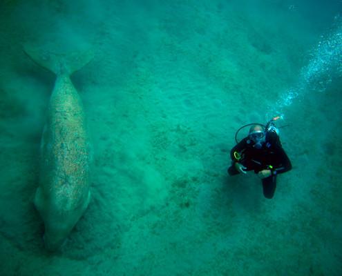 Marcin scuba diving in Egypt close to a dugong