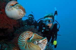 Diver Master certification Malaga