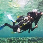 Dive beginner program