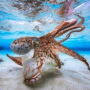 Gabriel Barathieu, Underwater photography, photography contest
