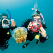 scuba divers jelly fish Spain