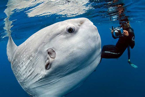 Scuba diving Costa del sol