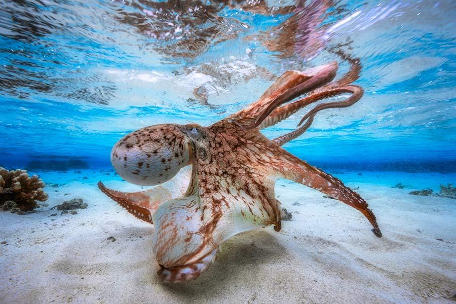 Gabriel Barathieu, Underwater photography, photography contest